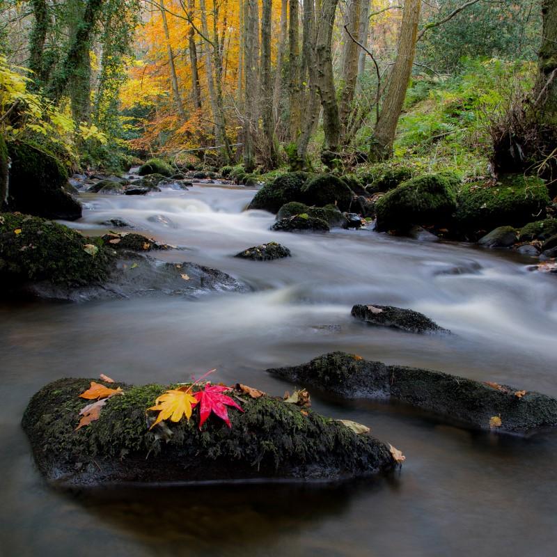 Inger Vandyke, Ribble Valley, Lancashire, UK, Photography, Fine Art